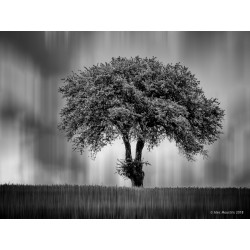 "Digital copy of ""a tree in..."